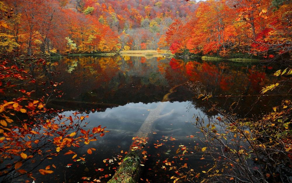 日本深秋---那些隔着屏幕被美哭的地方