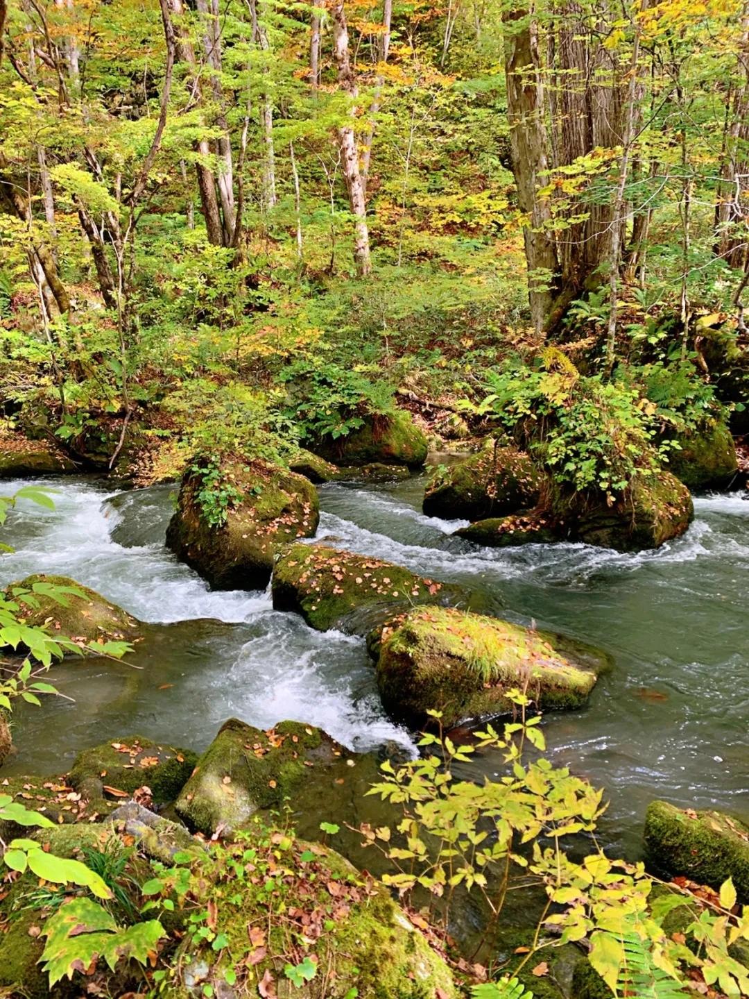 在青森开启自然之旅 看湖光山色 漫步茂密森林