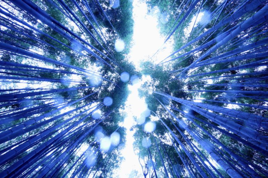 游京都竹林小径--最美景色是什么时候呢?