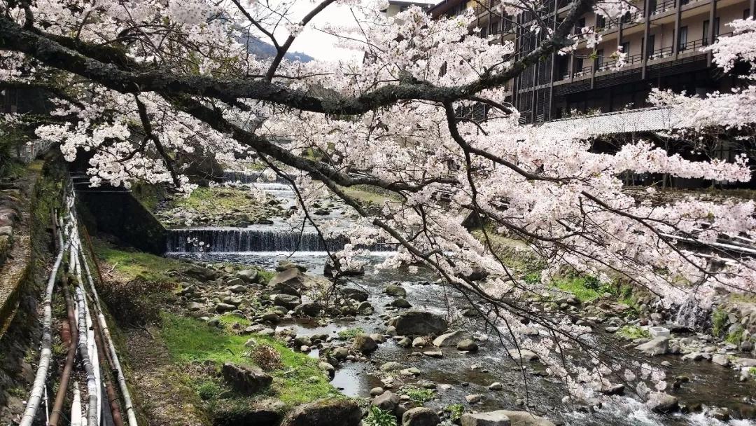 箱根   时光雕琢的浪漫 脚步丈量的风情